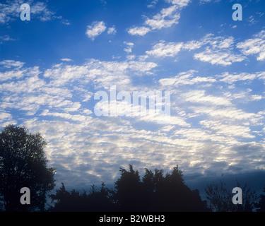 Silhouette d'arbres contre un ciel bleu et nuages Banque D'Images
