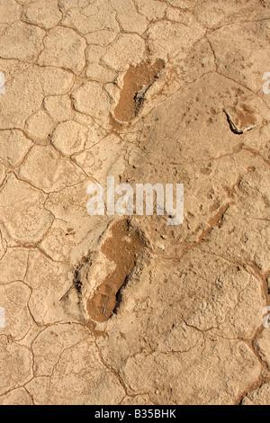 Footprints congelé dans la boue craquelée des modèles dans la roche calcaire de Dead Vlei un marais salant gauche Banque D'Images