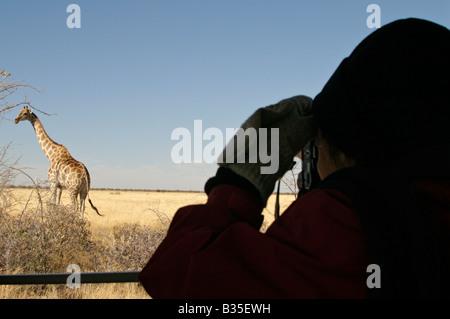 Regarder [girafe Giraffa camelopardalis] de camion safari dans le parc d'Etosha Wildlife park en Namibie Afrique Banque D'Images