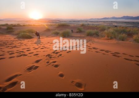 Les visiteurs marchent à l'aube parmi les dunes de sable des dunes de sable de Sossusvlei dans le sud-centre de Banque D'Images