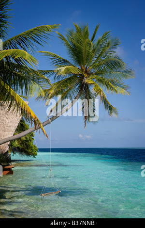 Rope swing sur South Ari Atoll Maldives près de l'Inde Banque D'Images