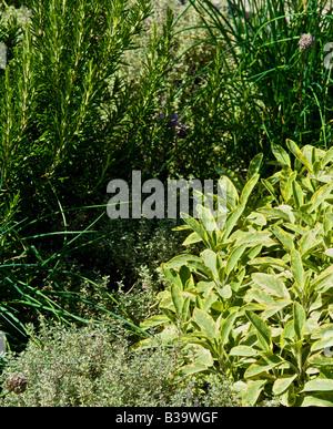 Un jardin d'herbe dans un jardin de fines herbes en août dans le sens des aiguilles d'une montre à partir du haut Banque D'Images