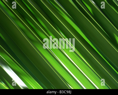 Feuilles de palmier vert