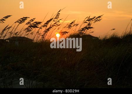 Coucher de soleil sur les dunes de l'Isle of Palms mer une île au large de la côte de la Caroline du Sud et maintenant Banque D'Images