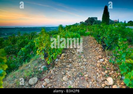 Lever du soleil sur les vignobles de Châteauneuf-du-Pape en France. Le château de Chateauneuf-du-Pape est à l'arrière Banque D'Images