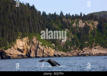 Baleine à bosse Kenai Fjords National Park près de Seward Alaska Banque D'Images