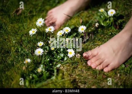 Un garçon de six ans est pieds nus parmi les marguerites in lawn Banque D'Images