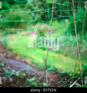 Résumé flou maille filet vert jardin Pays de Galles UK KATHY DEWITT