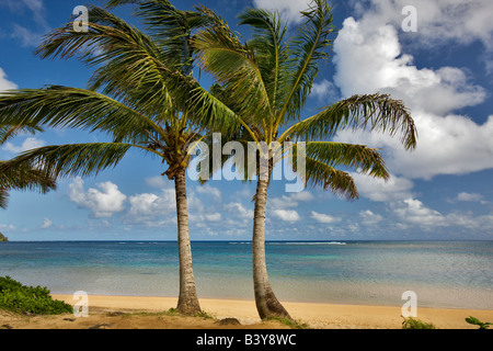 Deux palmiers à Anini Beach Kauai Hawaii Banque D'Images