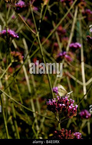Papillon sur les fleurs dans le soleil Banque D'Images