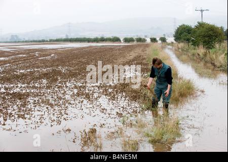 L'inspection d'agriculteurs dégâts dans champ de blé inondé de Northumberland Wooler Banque D'Images