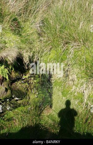 L'ombre d'un homme dans le champ dans la campagne Banque D'Images