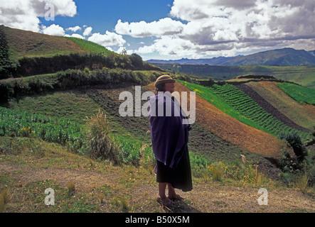 Près de champs agricoles femme Province de Cotopaxi Zumbahua Amérique du Sud Équateur Banque D'Images