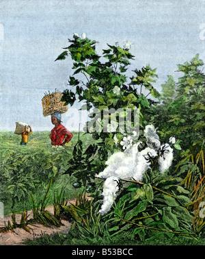 Esclaves afro-américains portant des paniers de coton dans un champ. La main, d'une illustration de demi-teinte Banque D'Images