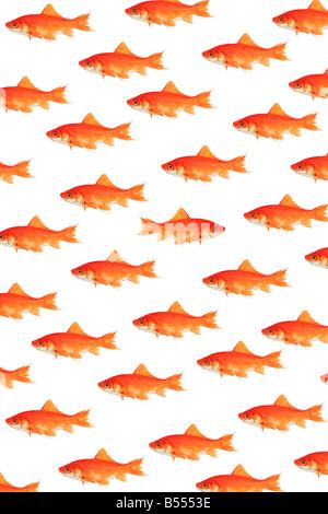 poissons Banque D'Images