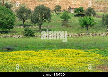 Champ de fleurs sauvages, l'île de Lesbos, Grèce, Europe Banque D'Images