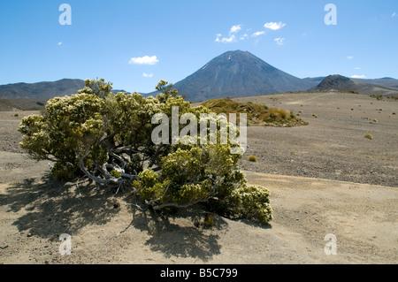 Le mont Ngauruhoe du désert Rangipo, Tongariro Circuit Nord, île du Nord, Nouvelle-Zélande Banque D'Images
