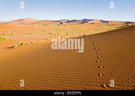L'Afrique, la Namibie, le désert de Namib, des pistes d'animaux Banque D'Images