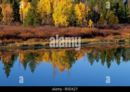 Reflets dans la rivière Serpent, Grand Tetons National Park, Wyoming, USA, Amérique du Nord Banque D'Images