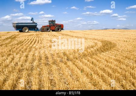 Un tracteur tirant un chariot à grain attend dans le domaine pour une moissonneuse-batteuse avec une trémie pleine Banque D'Images