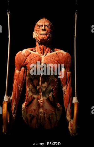 Biologie anatomie gymnaste Gunther von Hagen le monde du corps fonctionne plastination chair musculaire