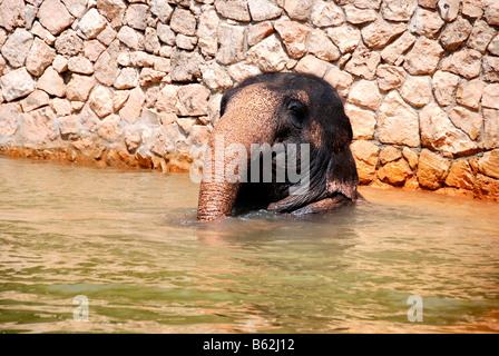 Bébé éléphant dans l'eau
