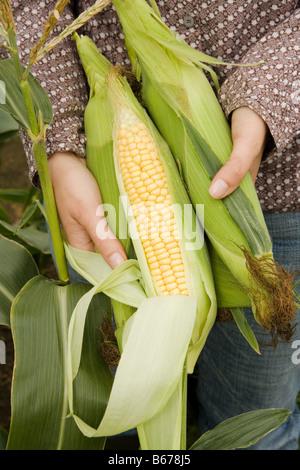 Femme tenant des épis de maïs frais Banque D'Images