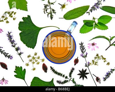 Infusion de plantes médicinales Banque D'Images