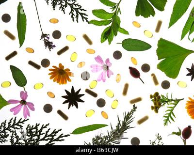 Plantes médicinales still life Banque D'Images