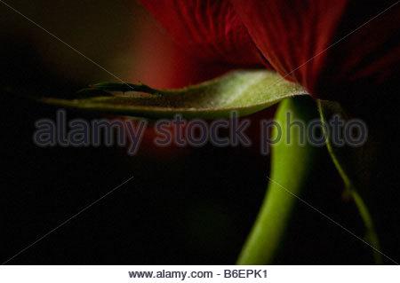 Close-up sur fleur Banque D'Images