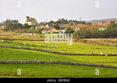 Champs verts dans un hameau dans le Connemara, République d'Irlande Banque D'Images