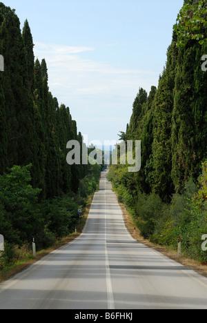 Bolgheri Toscane Italie Avenue des Cyprès Banque D'Images
