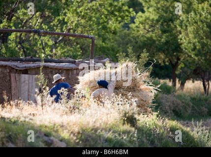 Les agriculteurs de blé ensemble tard dans la petite communauté agricole de Tisselday dans les montagnes de l'Atlas Banque D'Images