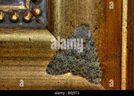 Photo macro d'une espèce repose sur un cadre photo en bois d'une peinture dans un hôtel Banque D'Images