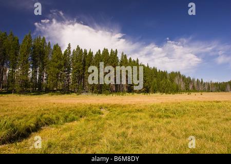 Le parc national de Yellowstone au Wyoming USA - pré dans la région du lac Riddle