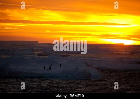 Ciel coucher soleil orange vif couvrant de premier plan des icebergs, glace flottante avec manchots adélies sur Banque D'Images