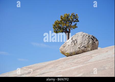 Un arbre solitaire sur une pente rocheuse Banque D'Images