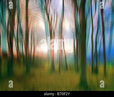 FINE ART: Magic Woods Banque D'Images