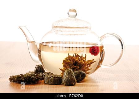 Fleur de thé thé en verre, close-up Banque D'Images