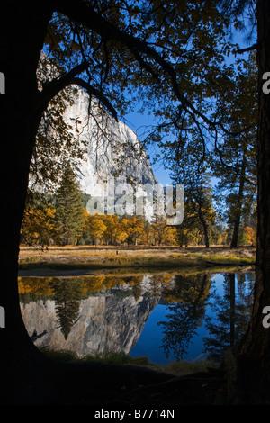 Couleurs d'automne et la base d'El Capitan se reflètent dans la rivière Merced YOSEMITE NATIONAL PARK CALIFORNIA