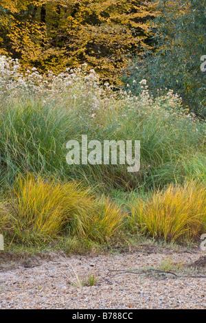 Les herbes indigènes tourner pendant l'automne couleurs dans la vallée Yosemite YOSEMITE NATIONAL PARK CALIFORNIA Banque D'Images