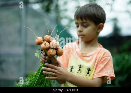Un garçon de six ans a bunch of carrots Banque D'Images
