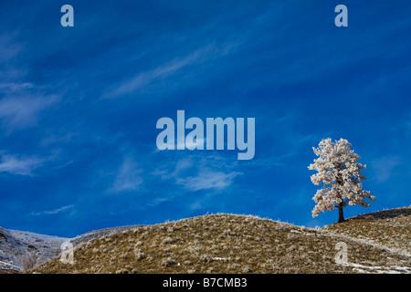 Un seul arbre couvert de neige sur le paysage Banque D'Images