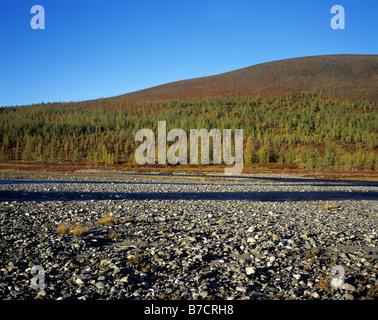 La Russie. Région de Yamal. L'Oural polaire. De l'automne. Banque D'Images