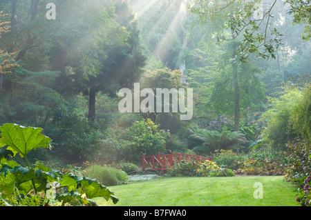 Abbotsbury jardin à la fin de l'été avec des rayons de soleils à travers le brouillard. Dorset UK. Banque D'Images