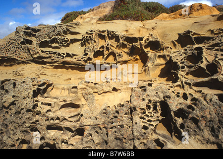 Les roches altérées sur la berge à creux de haricots State Beach, Californie, Pescadero Banque D'Images
