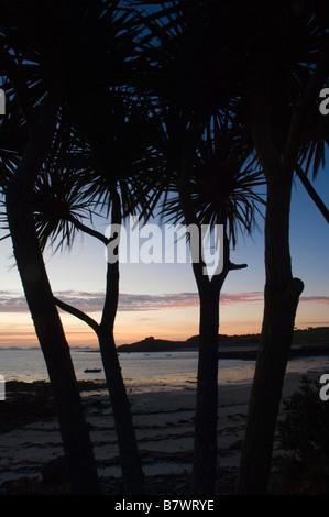 Le blockhaus, Vieux Grimsby vue à travers les palmiers à l'Hôtel de l'île. Tresco. Les Îles Scilly. Cornwall. L'Angleterre. Banque D'Images