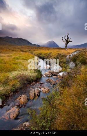 Cours d'eau par l'intermédiaire de Rannoch Moor désert Highland Ecosse Banque D'Images