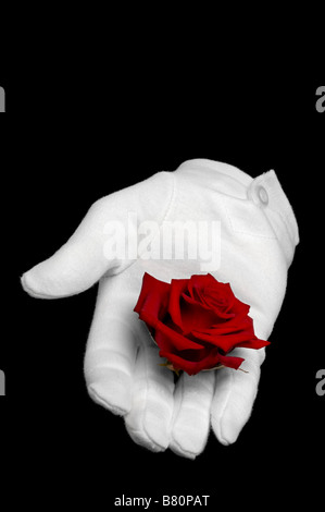 Une rose rouge soit tenue dans un gant blanc isolé sur fond noir Banque D'Images