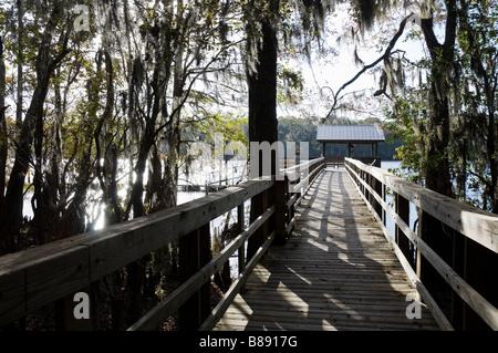 Promenade à Manatee Springs State Park, le long de la rivière Suwannee North Florida Banque D'Images
